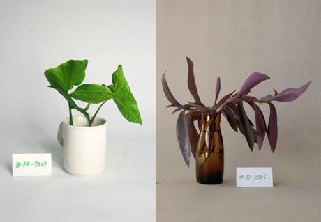 Vintage_plant